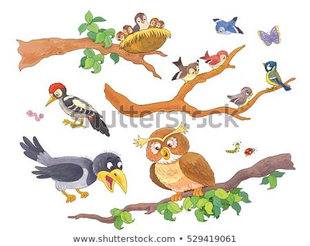 verde · papagaio · colorido · amarelo · sessão · ramo - foto stock © dvarg