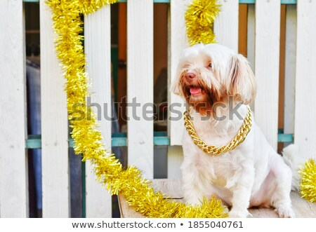 adorable tabby cat wearing golden necklace sits on fur Stock photo © feedough