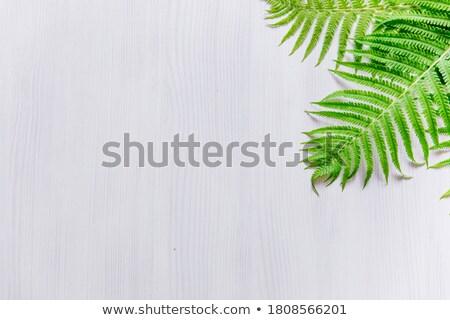 Fraîches fougère feuille gris espace de copie naturelles Photo stock © artjazz