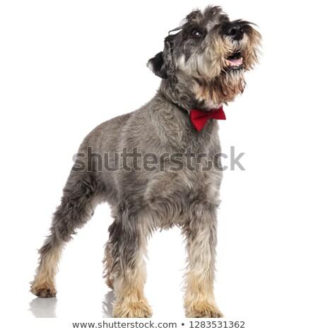 feliz · cavalheiro · calças · para · cima · em · pé - foto stock © feedough