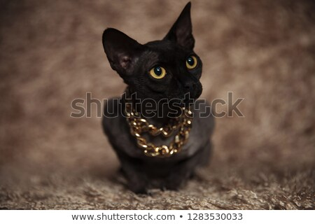 adorable metis cat wearing golden necklace looks to side Stock photo © feedough