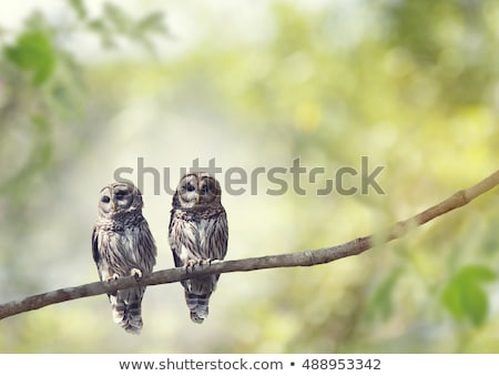 Two owls Stock photo © Nobilior