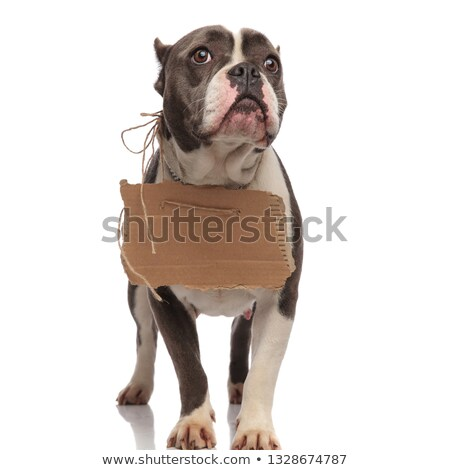 beggar american bully with empty billboard wants to be adopted Stock photo © feedough