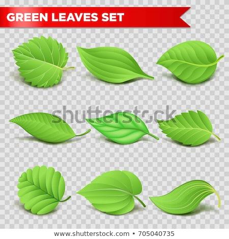 Foto stock: Verde · orgánico · etiqueta · aislado · transparente · gradiente