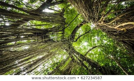 Regenwoud heilig aap bos bali boom Stockfoto © galitskaya