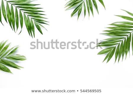 Keret zöld pálmalevél izolált fehér gradiens Stock fotó © barbaliss