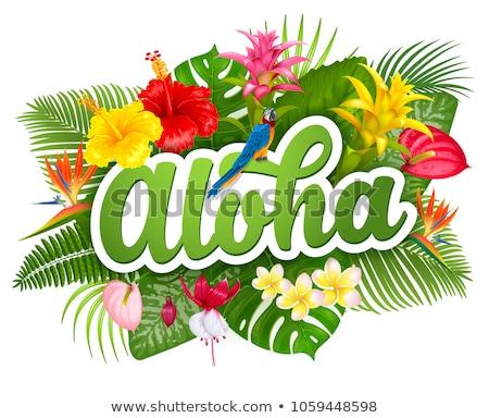 アロハ ハワイ 高い グラフィック 言葉 ストックフォト © kbuntu