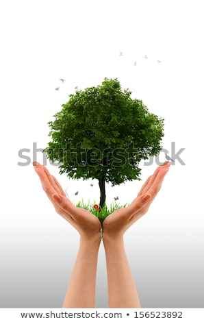 tree alive   hand stock photo © kbuntu