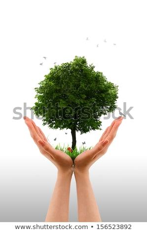 Zdjęcia stock: Tree Alive - Hand