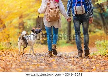 man walking dog in autumn forest park in fall stock photo © robuart