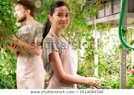 Pretty young successful gardener in apron taking care of growing strawberry Stock photo © pressmaster