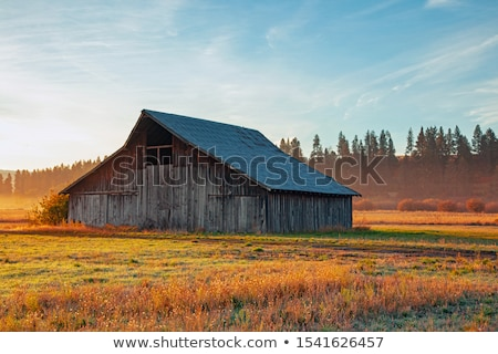 Weathered barn Stock photo © manfredxy