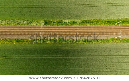 Stock photo: tracks in cornfield