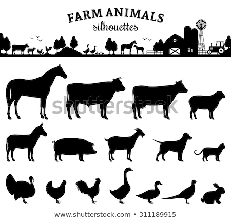 Stock photo: Rural landscape with farm animals.