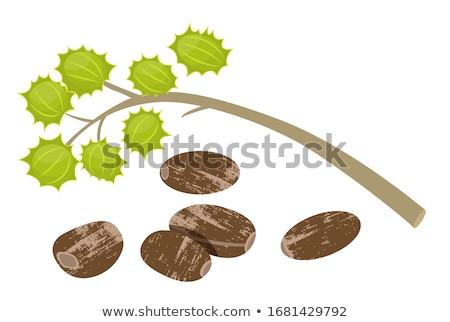 castor oil plant stock photo © stocksnapper