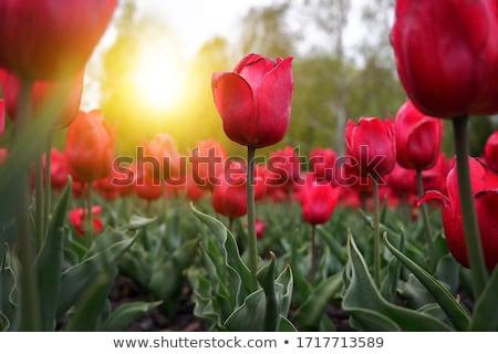 kert · hónap · illusztráció · kertészkedés · terv · háttér - stock fotó © adamson