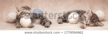 Kitten with banner stock photo © vlad_star