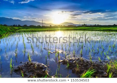 Sel mavi gökyüzü gıda Asya Stok fotoğraf © sweetcrisis