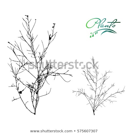 Natural wild plants and weeds silhouettes set. stock photo © Sylverarts