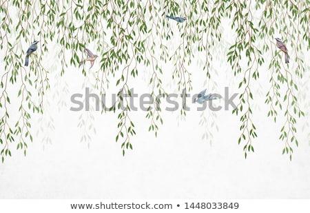 Birds in the tropical forest Stock photo © dagadu