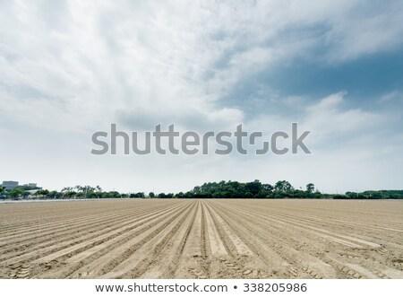 újonnan mező textúra természet tájkép háttér Stock fotó © meinzahn