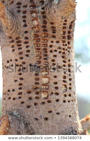 erros · foto · árvore · fundo · ciência - foto stock © 2tun