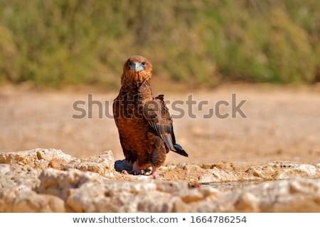 哺乳類 · 無料 · アフリカ - ストックフォト © livingwild