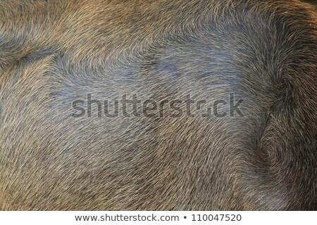 Rövid citromsárga szőr textúra fal divat Stock fotó © sfinks