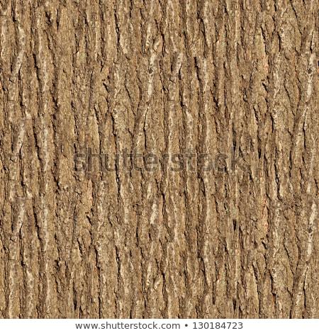 Elm Bark. Seamless Tileable Texture. Stock photo © tashatuvango