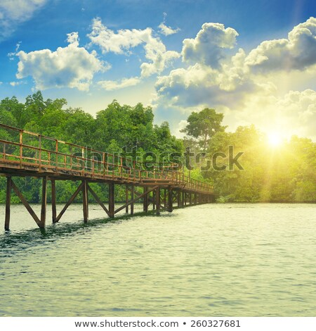 Wooden bridge over a pond in tropical park Stock photo © Nejron