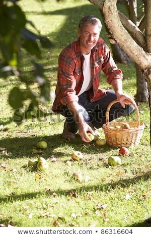 maçãs · grama · fruto · blue · sky · maçã - foto stock © monkey_business