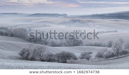 Winter FarmLand Stock photo © rghenry