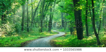 sunbeams at agravel road in a green forest stock photo © olandsfokus