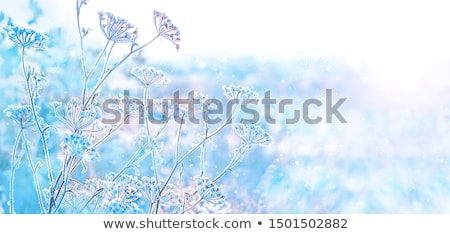 Background of frosty grass Stock photo © ongap