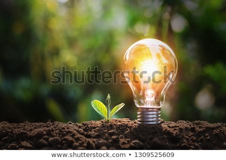 Boom gloeilamp groene energie business hand blad Stockfoto © tetkoren