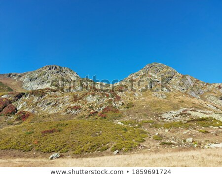 sparse vegetation on a rock in green and blue Stock photo © meinzahn