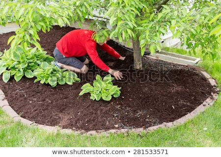 Gardener working in the garden doing the mulching stock photo © ozgur