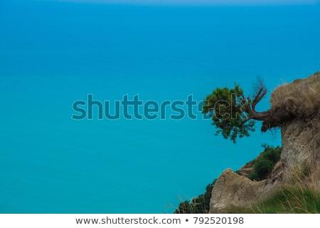 Ağaç asılı uçurum doğa deniz Stok fotoğraf © Arrxxx