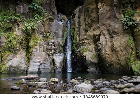 Foresta pluviale rupe acqua texture foresta panorama Foto d'archivio © smithore