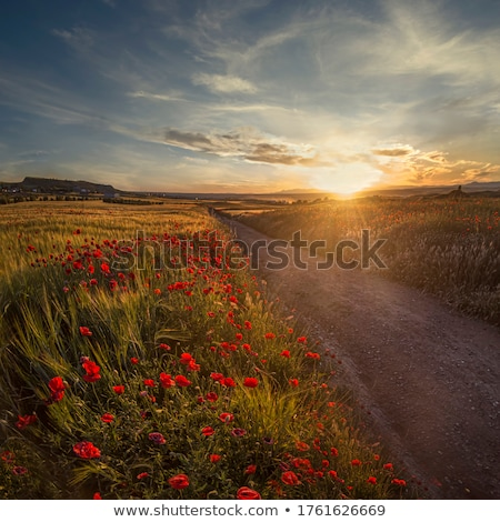 Cultivated Land Stock photo © milsiart