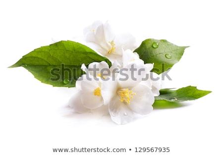 güzel · çiçek · ağaç · gökyüzü · güneş · ışık - stok fotoğraf © tetkoren