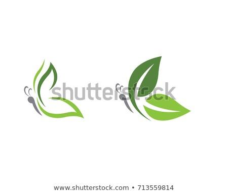 folha · borboleta · estoque · imagem · primavera · jardim - foto stock © Blackdiamond
