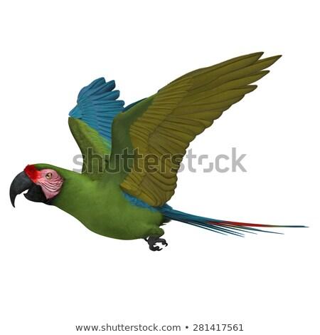 Militaire papegaai vliegen 3d render blauwe hemel vogel Stockfoto © Elenarts