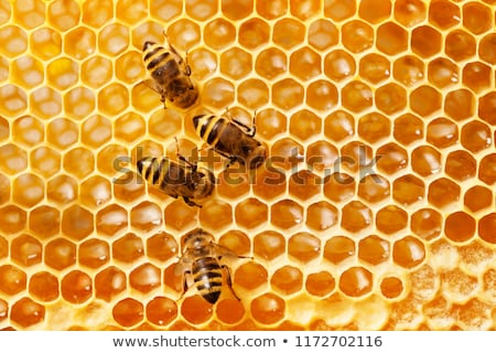 Beehive and honeycomb. Stock photo © RAStudio