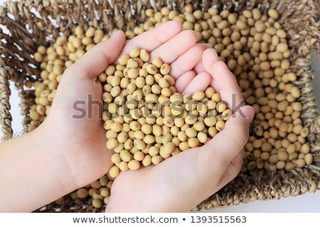 Handful of harvested soybeans heart-shaped pile, top view Stock photo © stevanovicigor