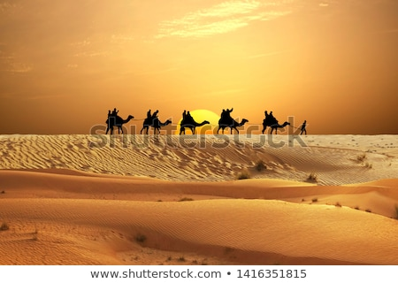 silhouettes of caravan of camels on desert sunset stock photo © gomixer