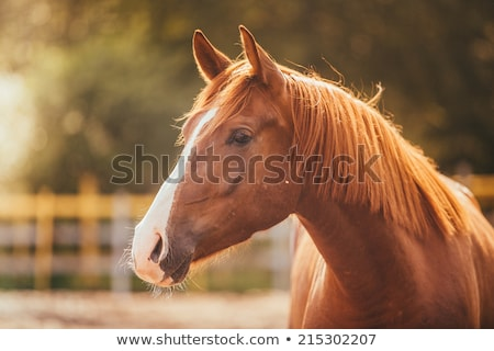 paard · weide · vrouw · zomer · jeans - stockfoto © oleksandro