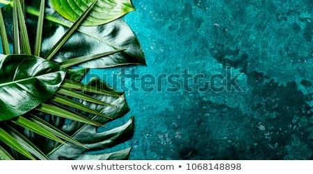 Yeşil eğreltiotu yaprakları üst görmek dizayn Stok fotoğraf © yelenayemchuk
