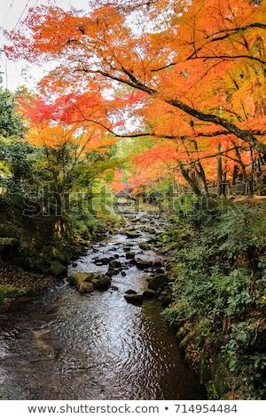 Ondiep stream kleurrijk bladeren groot Stockfoto © GreenStock