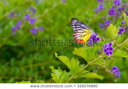 keret · zöld · növények · virágok · pillangó · itt - stock fotó © theblueplanet
